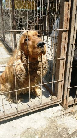 Hunde Ungarn